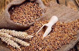 Le opportunità dell'agribusiness in Marocco